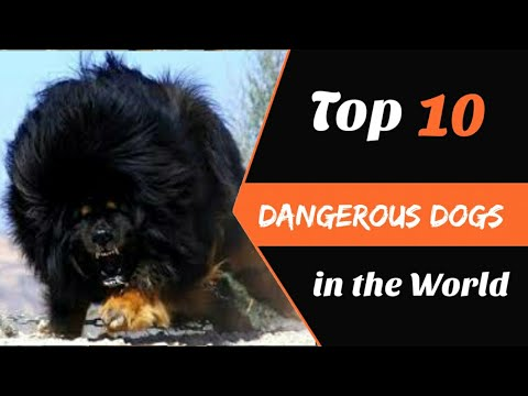 Top 10 - Dangerous Dogs in World