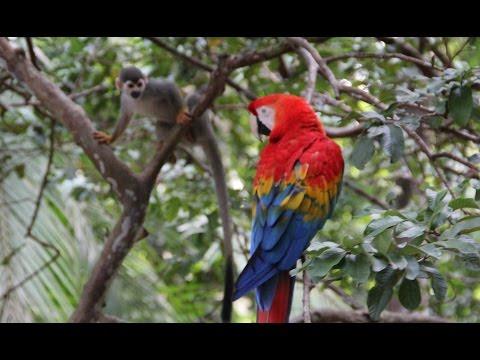 Amazon Jungle Tours from Manaus
