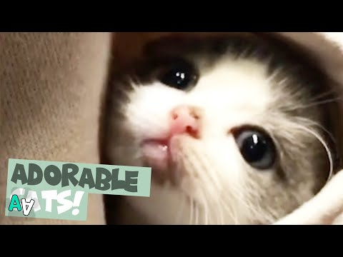 Adorable Cat Moments Caught on Camera