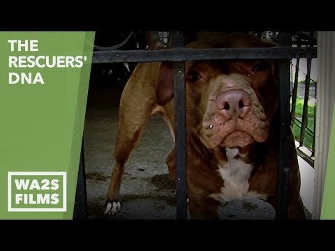 Is This What A Dog Hoarder Looks Like Or Did Detroit Dog Rescue Steal Dogs? EP #27 The Rescuers DNA