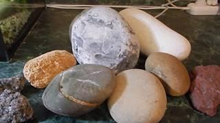 Мифы интернета. Морские камни в аквариуме.
