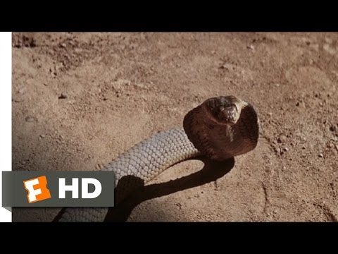 The Naked Prey (6/9) Movie CLIP - Snakes in the Desert (1966) HD