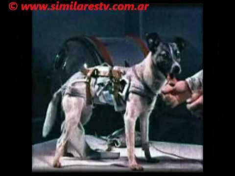 Laika Dog Breed Space
