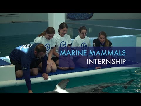 Marine Mammals Internship Program at Clearwater Marine Aquarium
