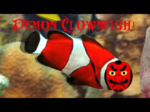 Watching A Demon Clownfish In It's Natural Habitat In Fish Farm 3