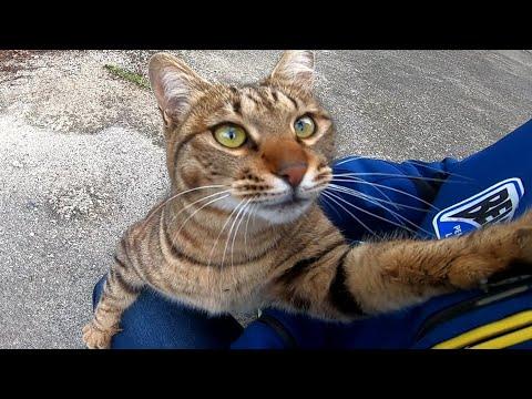 野良猫を撫で撫でしていたら懐いてきて付いてくるようになった。