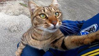 野良猫を撫で撫でしていたら懐いてきて付いてくるようになった。 thumbnail