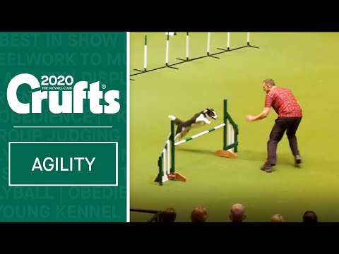 Large International Agility Final | Crufts 2020