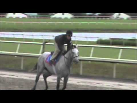 Forecon at Palm Meadows February 2013