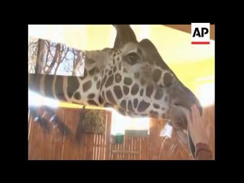 Watchdog groups want Ukraine zoo closed