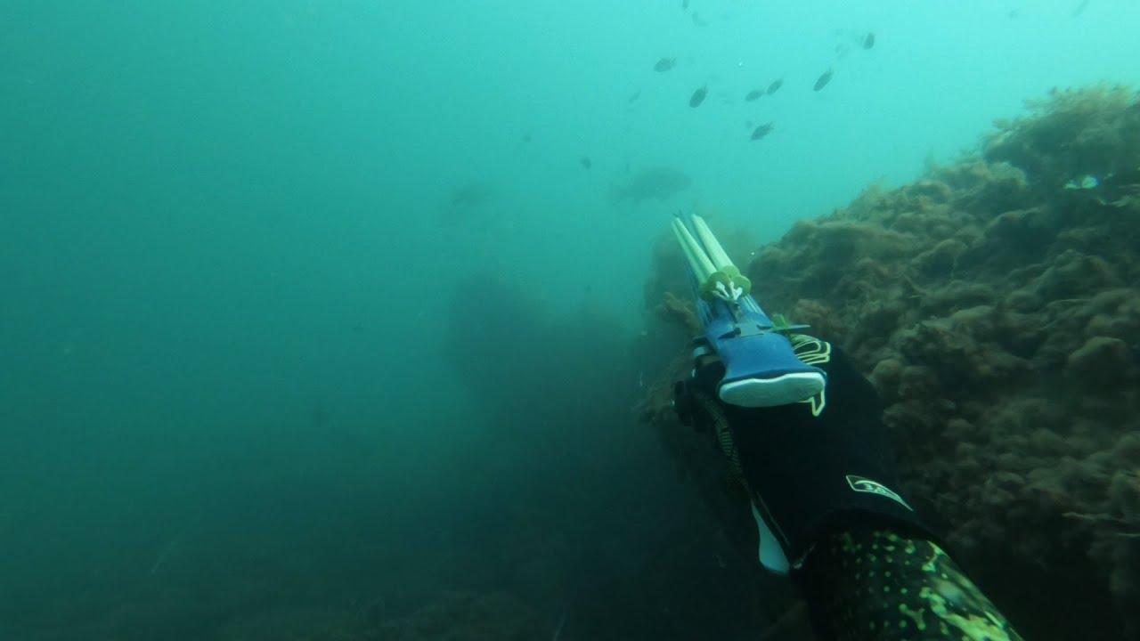 Горбыли из толщи. Подводная охота.