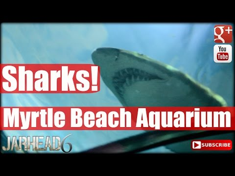 Myrtle Beach Aquarium Shark Tank March 2015!