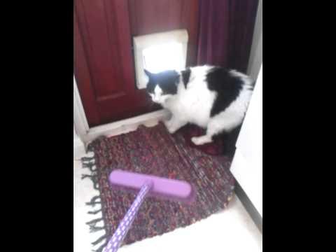 Funny cats,  hissing psycho cat