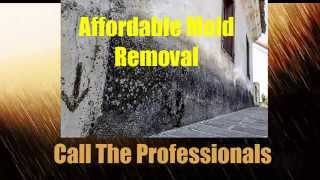 Black Mold Removal NJ  | Emergency Black Mold Removal NJ Companies