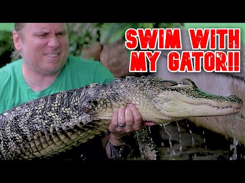 swimming-with-my-giant-pet-alligator!!-|-brian-barczyk