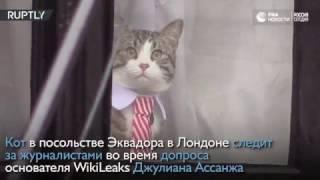 Кот в посольстве Эквадора в Лондоне