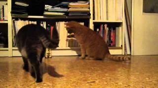 2匹の猫がメトロノームと対峙する。果たしてその結末とはいかに!?