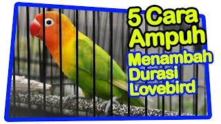 Video 5 Cara Praktis Menambah Durasi Lovebird download MP3, 3GP, MP4, WEBM, AVI, FLV Mei 2018