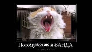 веселый кот/новые смешные видео про котов
