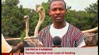 News 360 - Special report on Ostrich Farming - 10/2/2014
