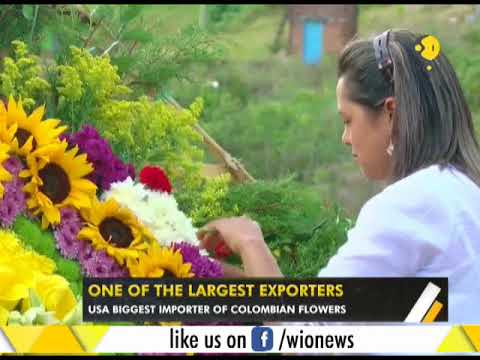 WION Gravitas: Colombia's flower industry valued at over $1 billion annually