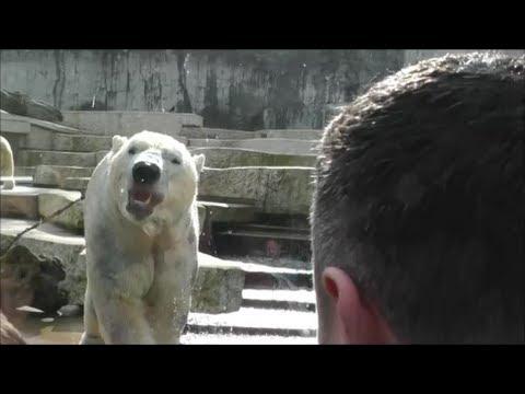 polar badet