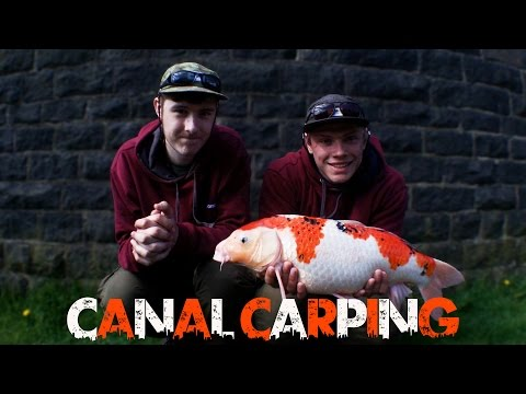 BIG KOI CARP FROM A CANAL!
