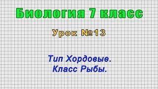 Биология 7 класс (Урок№13 - Тип Хордовые. Класс Рыбы.)
