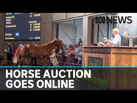 Inglis Easter Yearling Sale Hobbled As Coronavirus Forces Horse Auction Online | ABC News