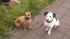 Die Hundesteuer-Fahnder