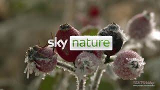 Sky Nature HD UK December Advert 2020❄️