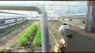видео Геотермальное отопление теплицы: делаем своими руками