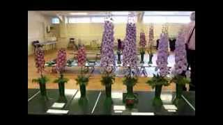 Late Delphinium SocietyShow - RHS Wisley Garden 2013