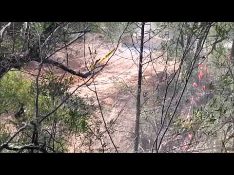 Whitehaven Coal Begin Bulldozing Leard State Forest To Make Way For Maules Creek Coal Mine