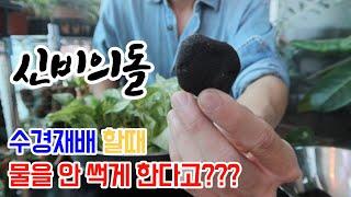 신비의돌 - 식물 수경재배 물을 썩지 않게 하는 방법!…