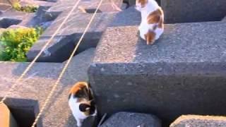 上にいる猫が釣り人からもらった魚から少し離れた隙に、下にいた三毛猫...