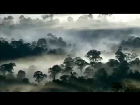The Borneo Rainforest
