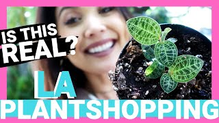 Plant Shopping in LA pt.3!!!! | RARE ORCHID Plant Shopping 2019