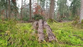 Przez las