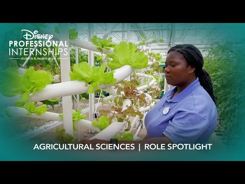 Agricultural Sciences | Disney Professional Internship Role