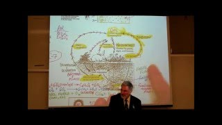 CARBON CYCLE & GLOBAL WARMING; ECOSYSTEMS PART 2 by Professor Fink