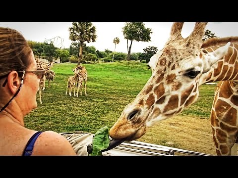 Serengeti Safari at Busch Gardens Tampa YouTube