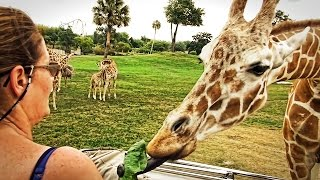 Serengeti Safari at Busch Gardens Tampa