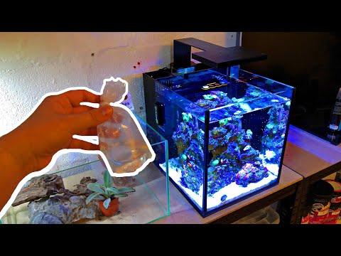 Rare Animal Added - Nano Reef Tank No Skimmer