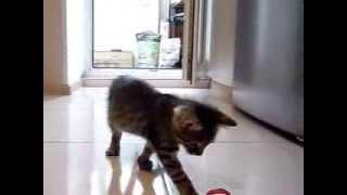 Котик срочно ищет хозяина!!!!