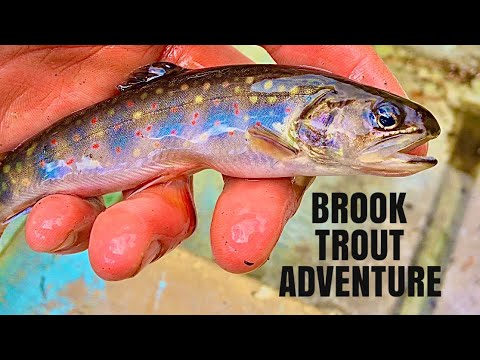 Calabogie Backcountry Brook Trout Adventure
