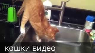 кошки видео купание