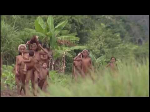 Documentary Tears Of The Girls Forest  Amazon Hang coldness