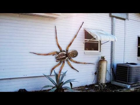 10 Of The Worlst BIGGEST SPIDERS! 2019 #1