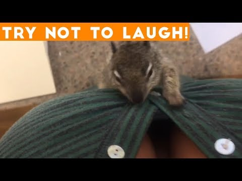 TOP 100 FUNNY ANIMALS of 2018 | Try Not To Laugh Challenge March / April | Funniest Pet Videos